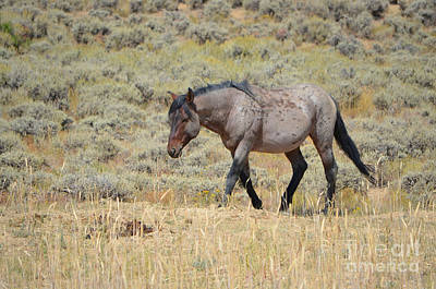 Photograph - The Mare IIi - White Mountain Herd Wyoming by Donna Greene