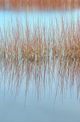 Photograph - The Marsh Mirror by Loree Johnson