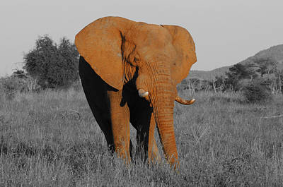 Ousting Photograph - The Matriarch Rules by Douglas Barnard
