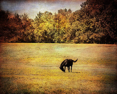 Photograph - The Meadow by Jai Johnson