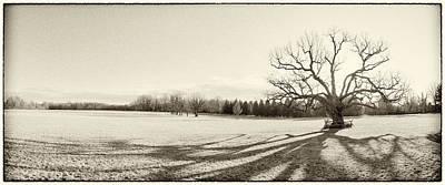 The Mercer Oak Original by Jan W Faul