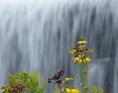 The Middle Falls II Art Print by Neal Blizzard