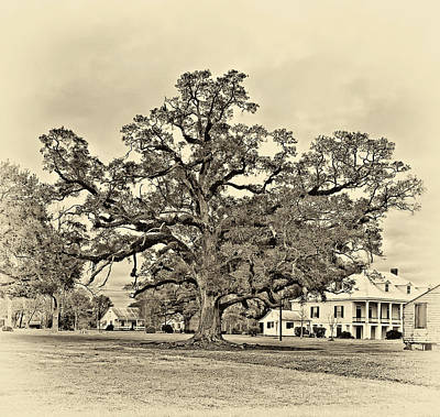 Live Oaks Digital Art - The Mighty One Sepia by Steve Harrington