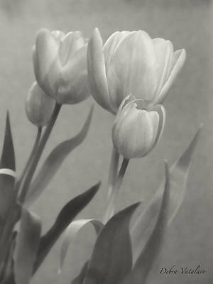 The Mirror Tulips Art Print by Debra     Vatalaro