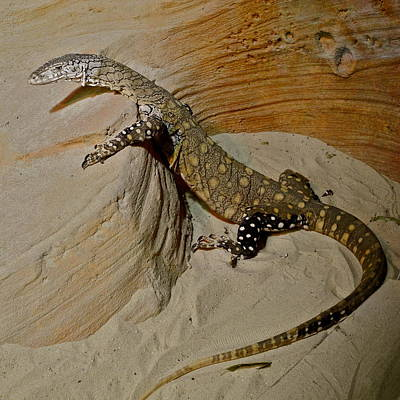 Photograph - The Molting Lizard by Kirsten Giving