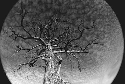 Photograph - The Moon Tree by Artist Orange