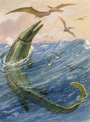 The Mosasaurus Species Lived In Kansas Art Print by Charles R. Knight