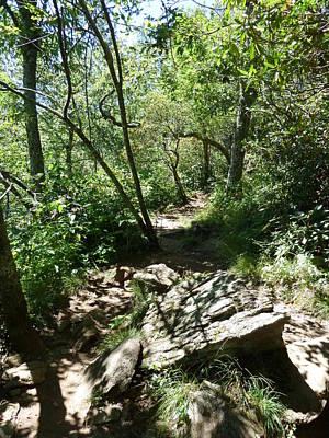 Photograph - The Mount Pisgah Trail by Joel Deutsch