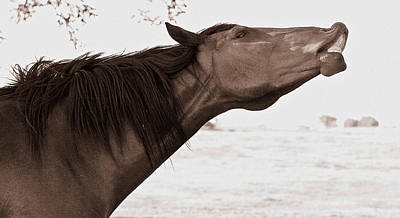 Photograph - The Mustang Way by Elizabeth Hart