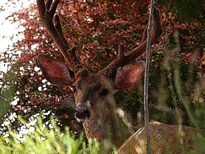 Digital Art - The Nature Stare Down by Teri Schuster