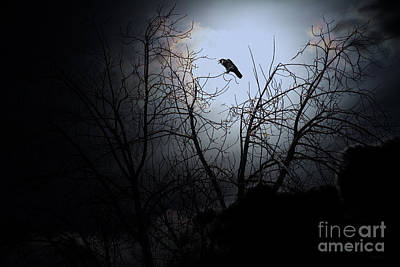 The Night The Raven Appeared In My Dream . 7d12631 Art Print by Wingsdomain Art and Photography