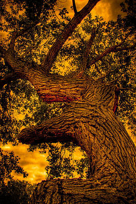 Photograph - The Oak Tree At Red Rock Canyon by David Patterson