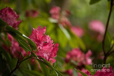 Rhodie Photograph - The Observers by Mike Reid