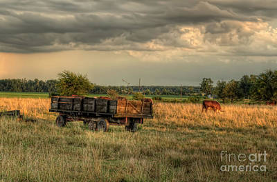 Hay Wagon Photograph - The Old Hay Wagon by Pamela Baker