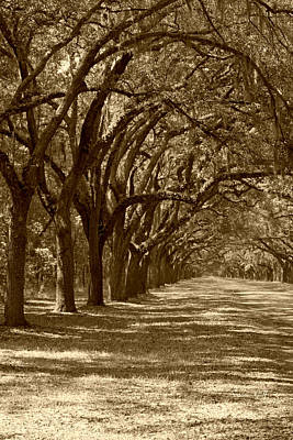 Photograph - The Old South Series In Sepia by Suzanne Gaff