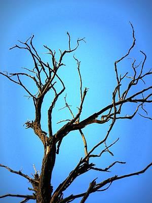 The Old Tree Art Print by Mara Barova