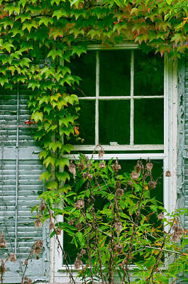 Photograph - The Other Window by Lisa  DiFruscio