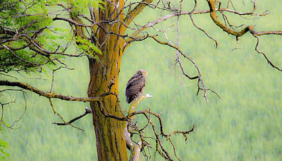 Photograph - The Owls Overlook by Steve McKinzie