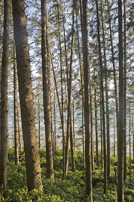 The Pacific Ocean Seen Through A Forest Art Print by Taylor S. Kennedy