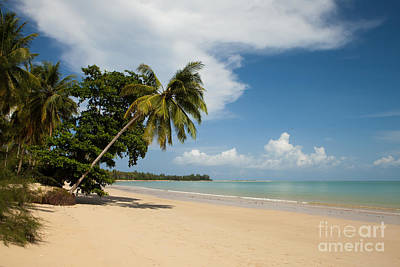 Pete Reynolds Photograph - The Palms Of Khao Lak by Pete Reynolds