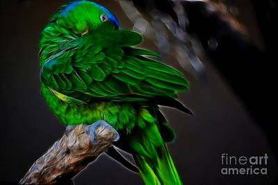 Photograph - The Parrot Fractal by Donna Greene