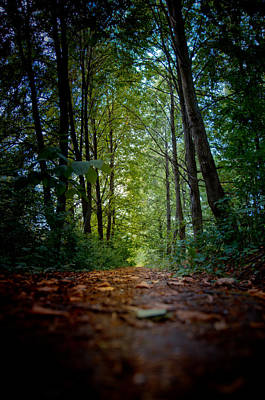 The Pathway In The Forest Art Print