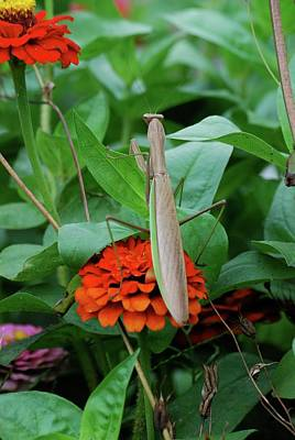 Art Print featuring the photograph The Patience Of A Mantis by Thomas Woolworth