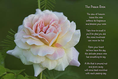 The Peace Rose Art Print