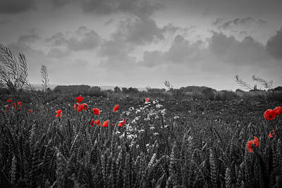 Mais Photograph - The Poppy by Andreas Levi