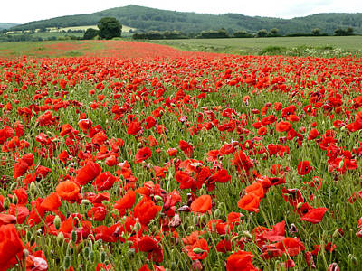 The Poppy Field Clonmel Art Print
