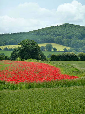 The Poppy Field. Art Print