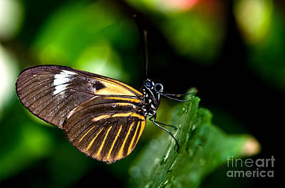 Photograph - The Postman Butterfly by Terry Elniski