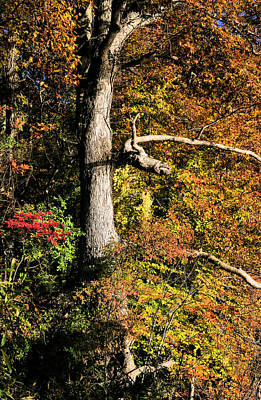 Photograph - The Power Of Autumn by JC Findley