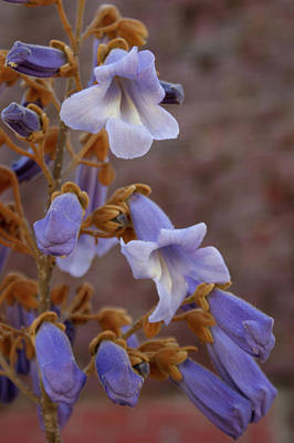 Art Print featuring the photograph The Princess Flower by Paul Mashburn