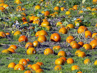 Photograph - The Pumpkin Patch by Sharon Talson