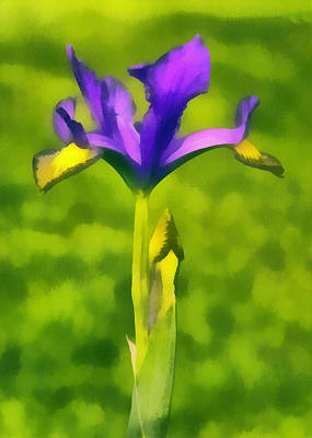 The Purple Iris Art Print