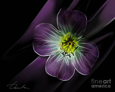 Photograph - The Quality Of Being Delicate by Danuta Bennett