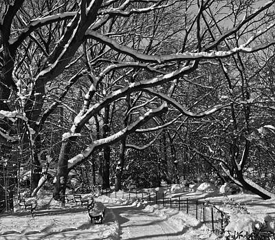 Photograph - The Ramble In Winter by Steven Mancinelli