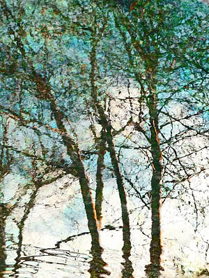 The Reflected Trees Art Print by Steve Taylor
