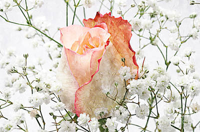 The Rose Art Print by Andee Design