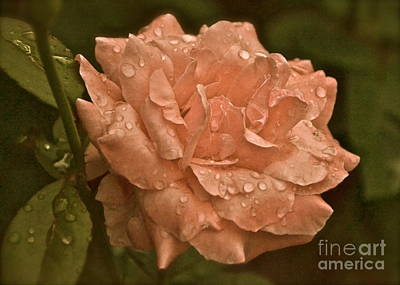 Photograph - The Rose by Carol  Bradley