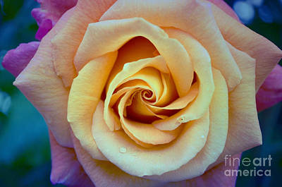 Photograph - The Rose by Tara Turner
