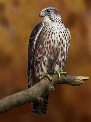Digital Art - The Saker Falcon by Deak Attila