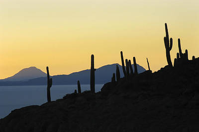 Sunset Photograph - The Salar De Uyuni And Silhouettes Of Cactus. Republic Of Bolivia. by Eric Bauer
