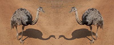 Ostrich Photograph - The Same Here by Douglas Barnard