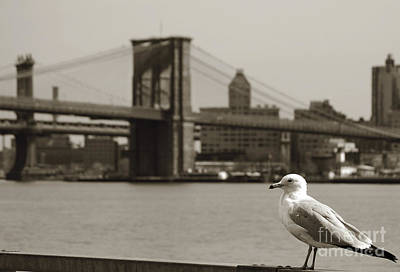 Newyork08 Photograph - The Seagull Of The Brooklyn Bridge by RicardMN Photography