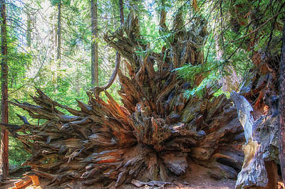 Photograph - The Sequoia Has Fallen by Peter Dyke