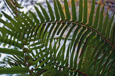 Photograph - The Shade Of A Fern by Tikvah's Hope