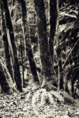 The Silent Woods Art Print by Bonnie Bruno