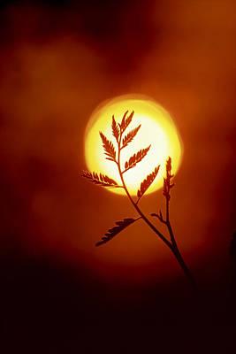 Locust Sunset Photograph - The Silhouette Of A Locust Tree Branch by Rex A. Stucky